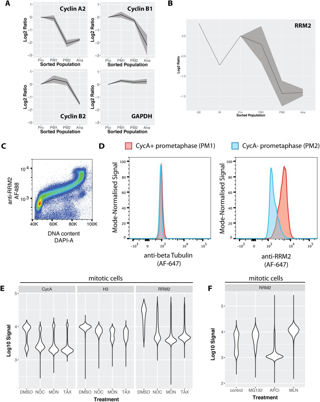 Proteomic analysis of cell cycle progression in asynchronous