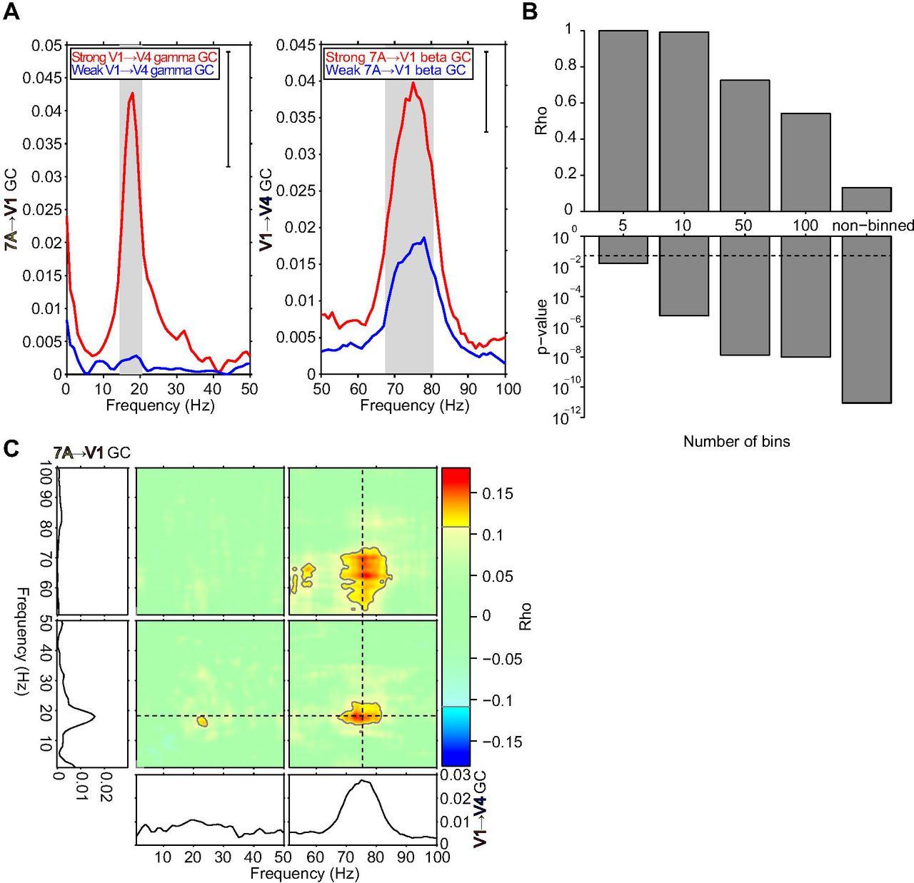 Top-down beta enhances bottom-up gamma | bioRxiv