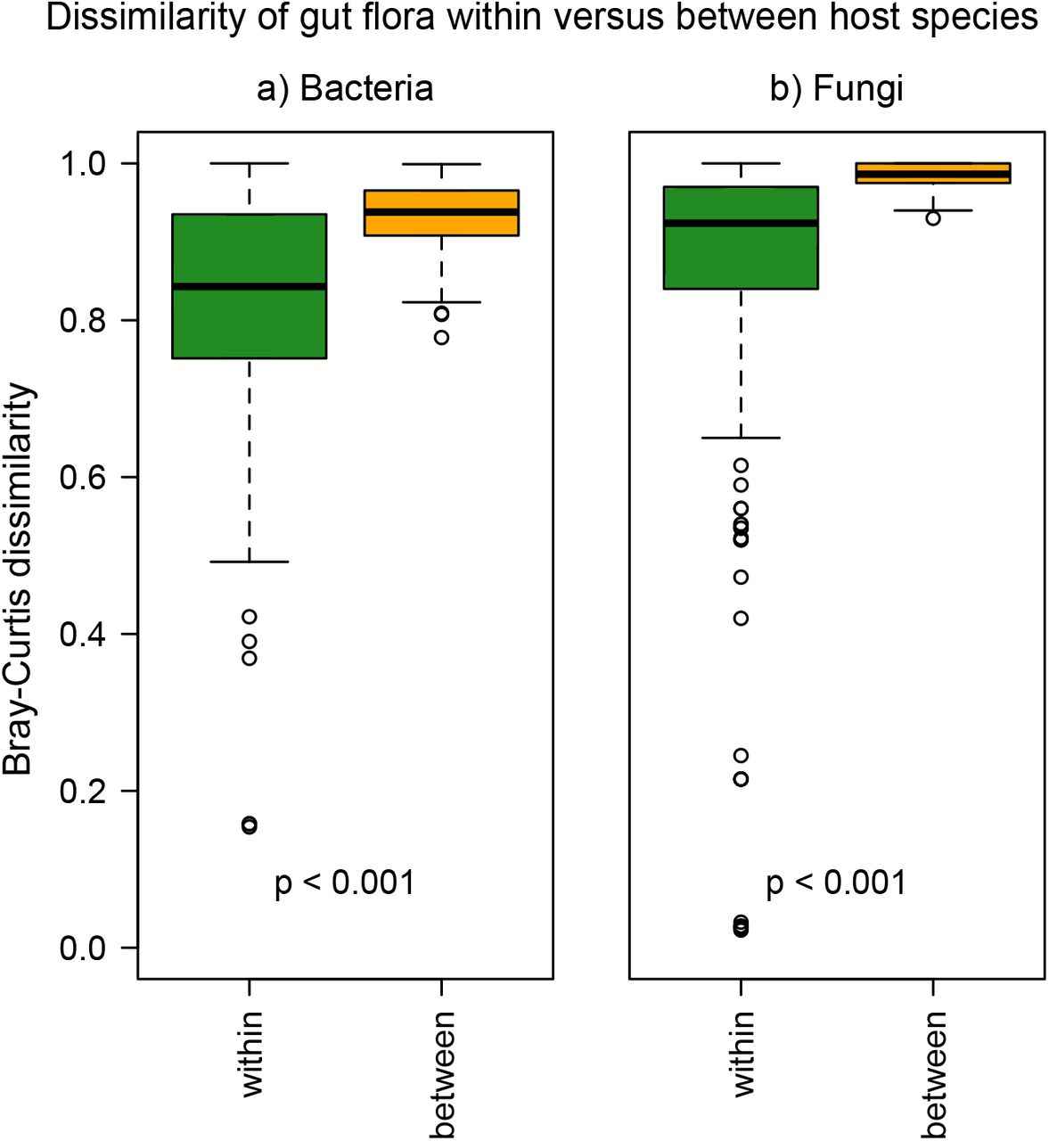 Structure and function of the bacterial and fungal gut flora