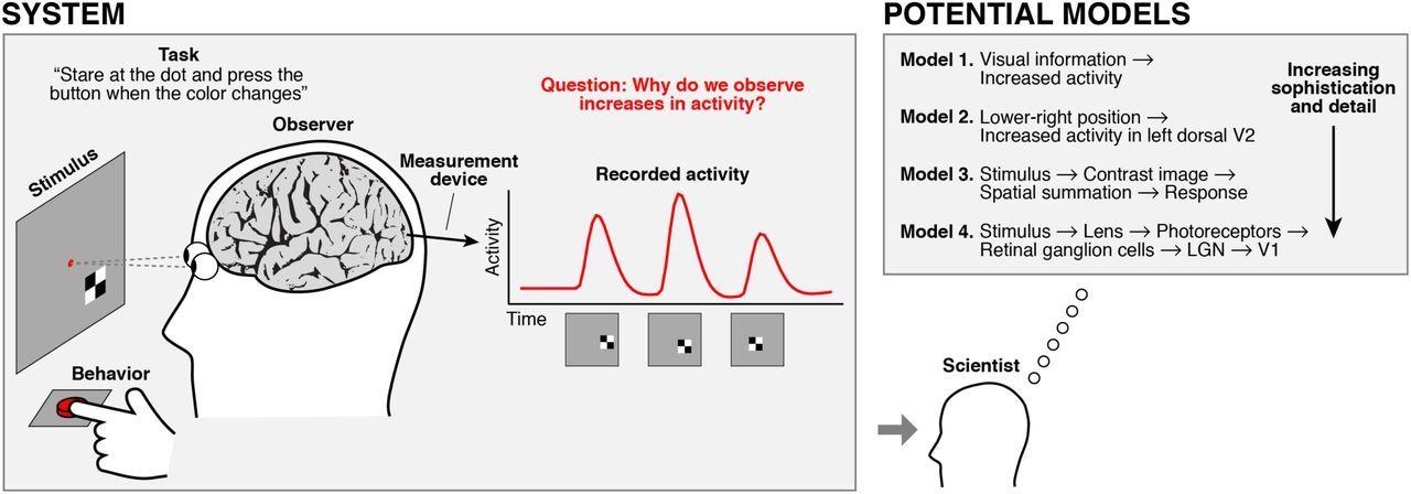Principles for models of neural information processing | bioRxiv