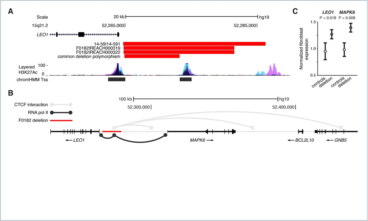 Paternally inherited noncoding structural variants contribute to