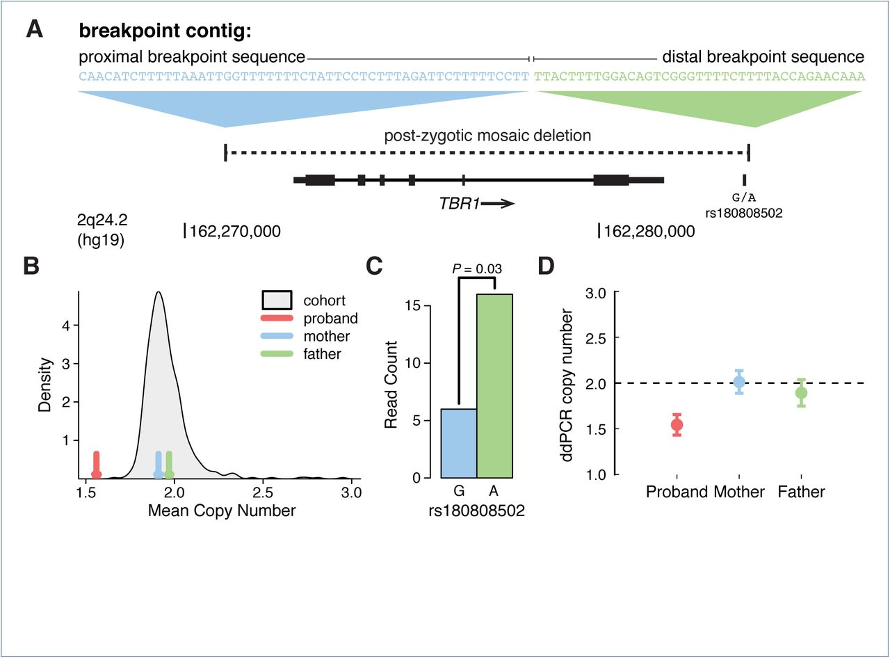Paternally inherited noncoding structural variants