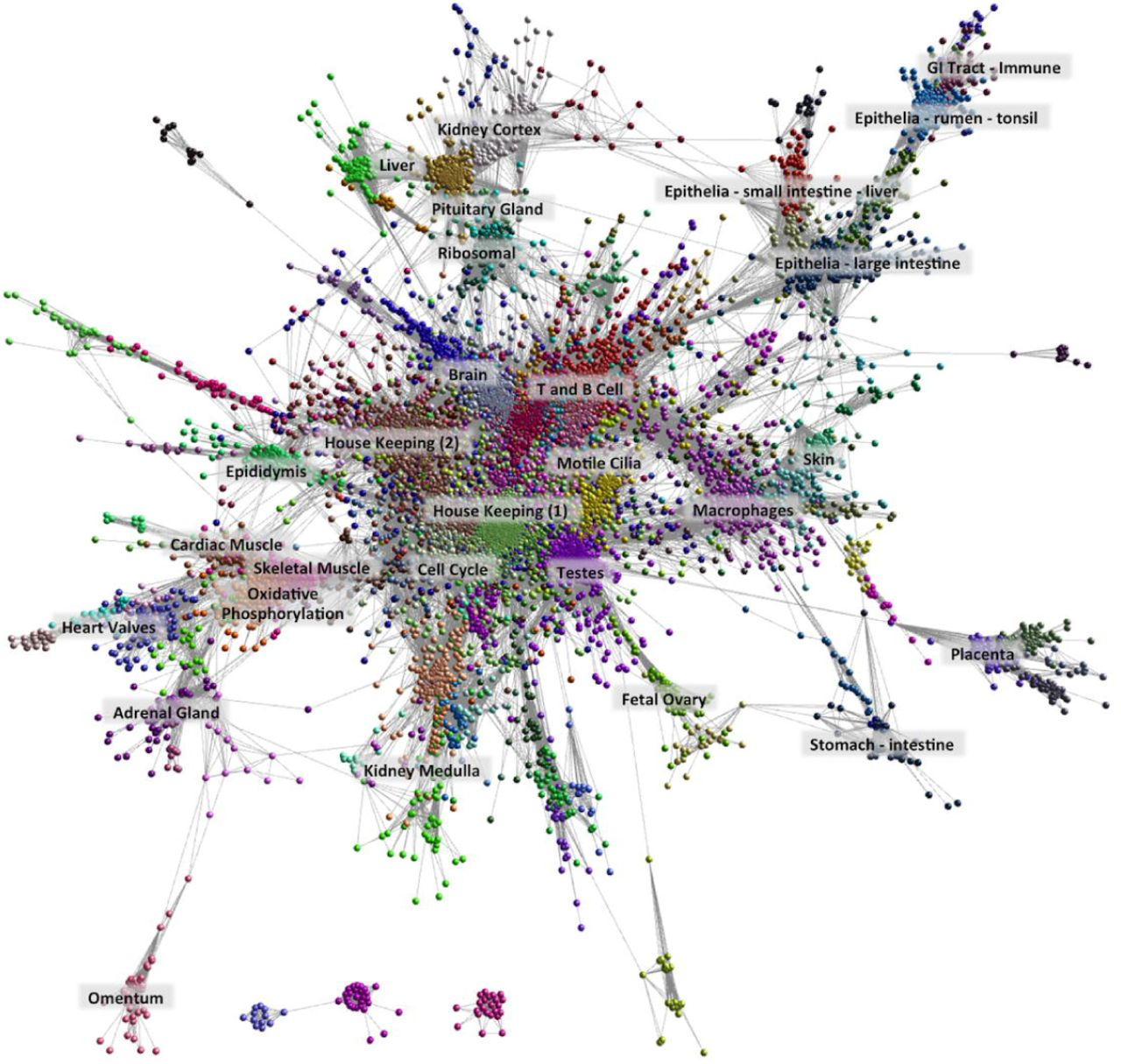 A high resolution atlas of gene expression in the domestic