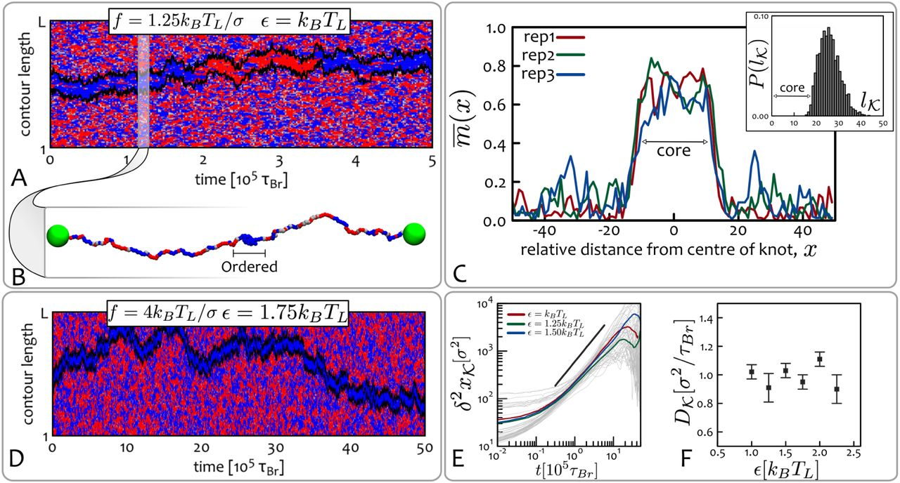 Epigenetic Transitions and Knotted Solitons in Stretched