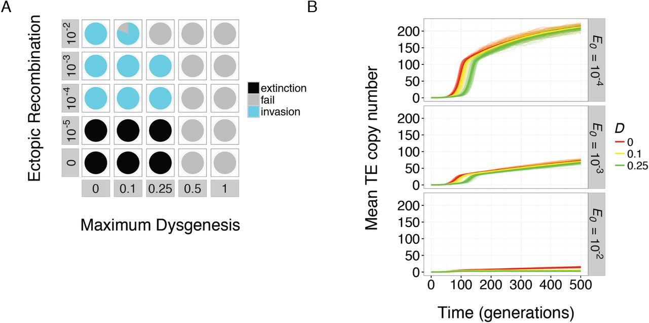 The Evolution of Small RNA-Mediated Silencing of an Invading