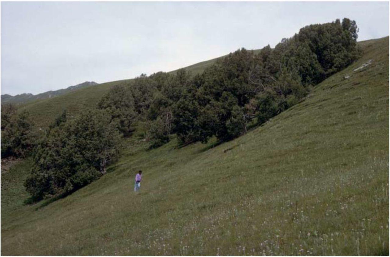 The Kobresia pygmaea ecosystem of the Tibetan highlands – origin