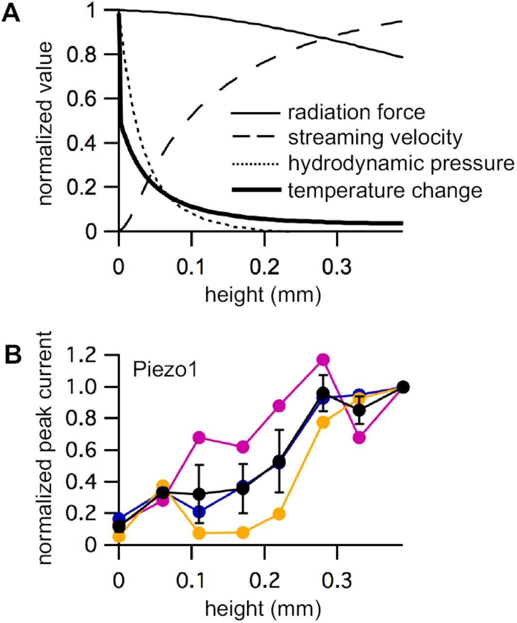 Mechanical Activation of Piezo1 but not Nav1 2 Channels by