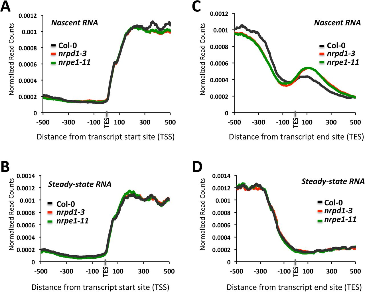 Rna Polymerases Iv And V Influence The 3 Boundaries Of Polymerase