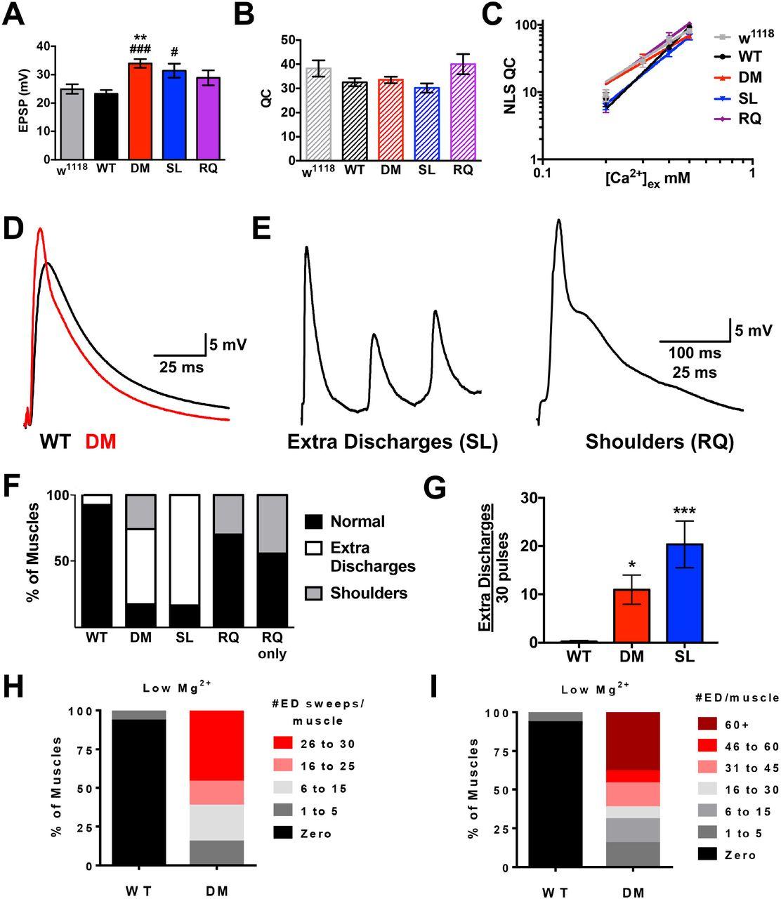 Drosophila Cav2 channels harboring human migraine mutations cause