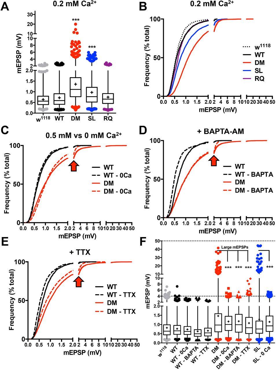 Drosophila Cav2 channels harboring human migraine mutations