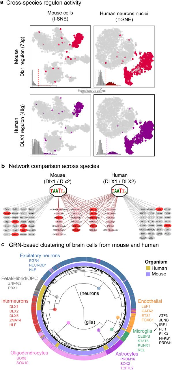 SCENIC: Single-cell regulatory network inference and