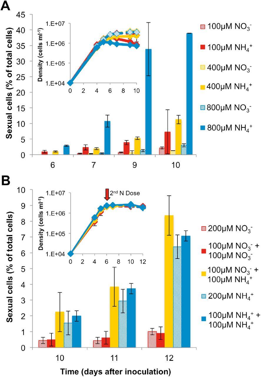 Morphological and transcriptomic evidence for ammonium