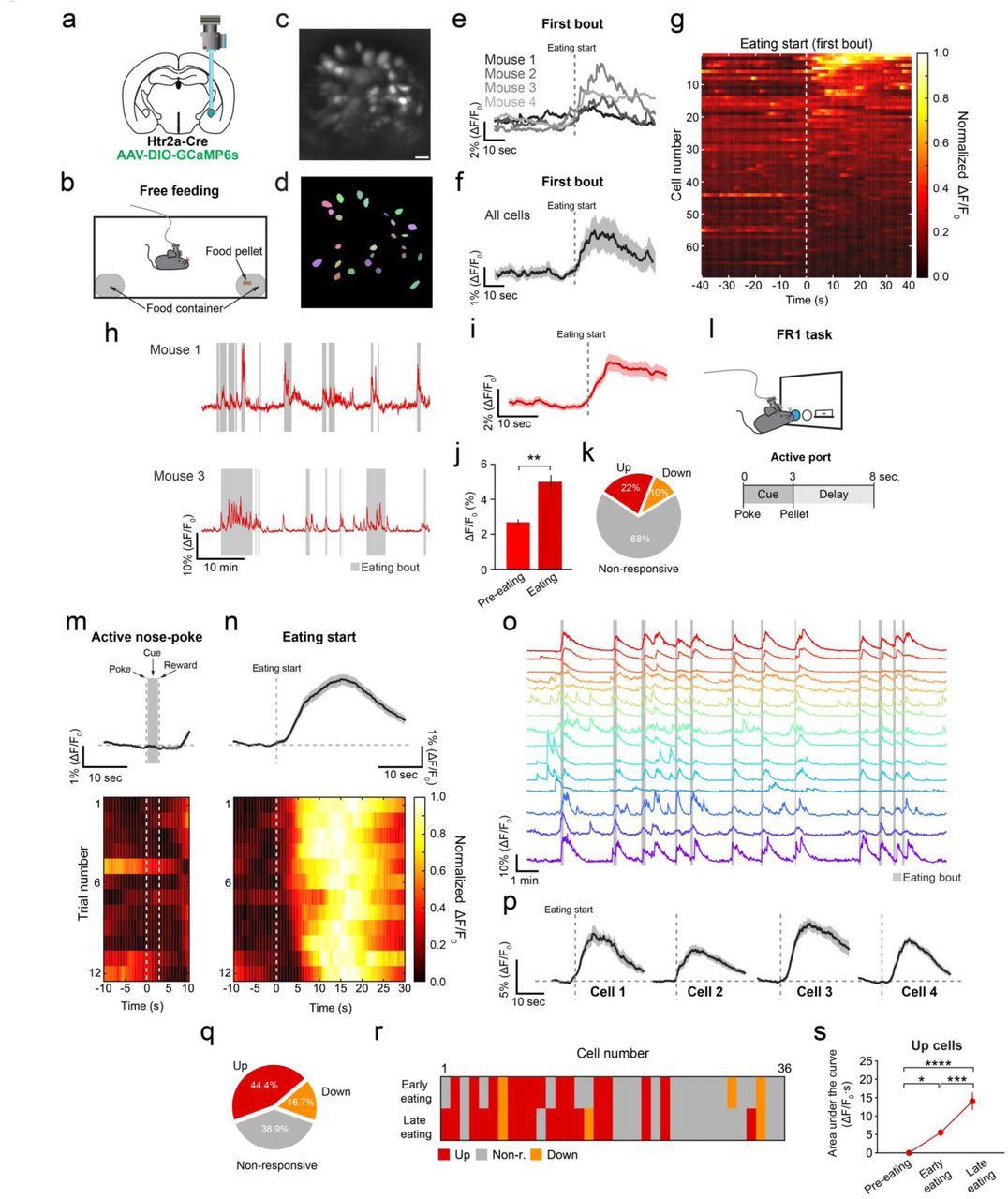 Central amygdala circuits modulate food consumption through a