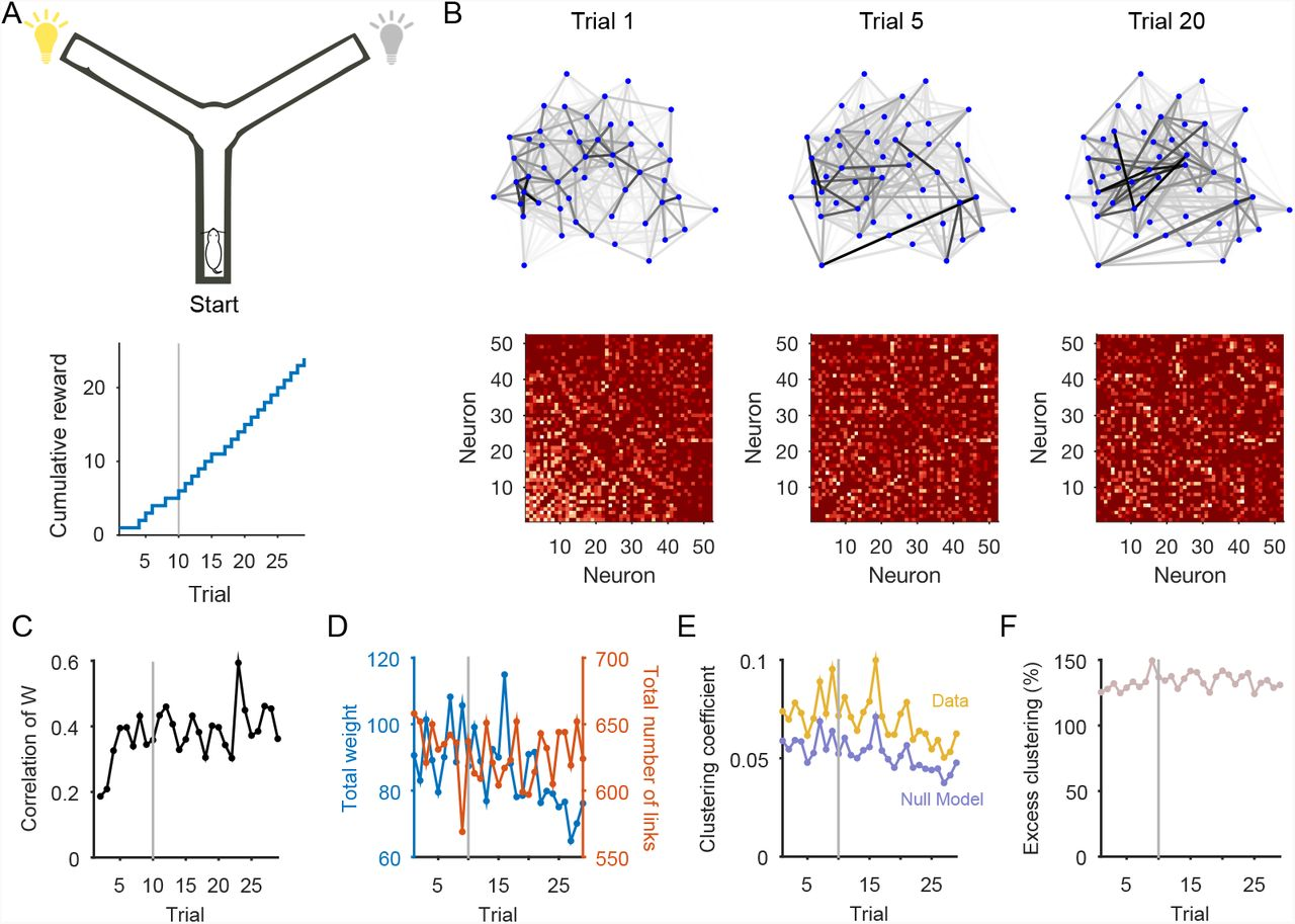 Dynamical networks: finding, measuring, and tracking neural