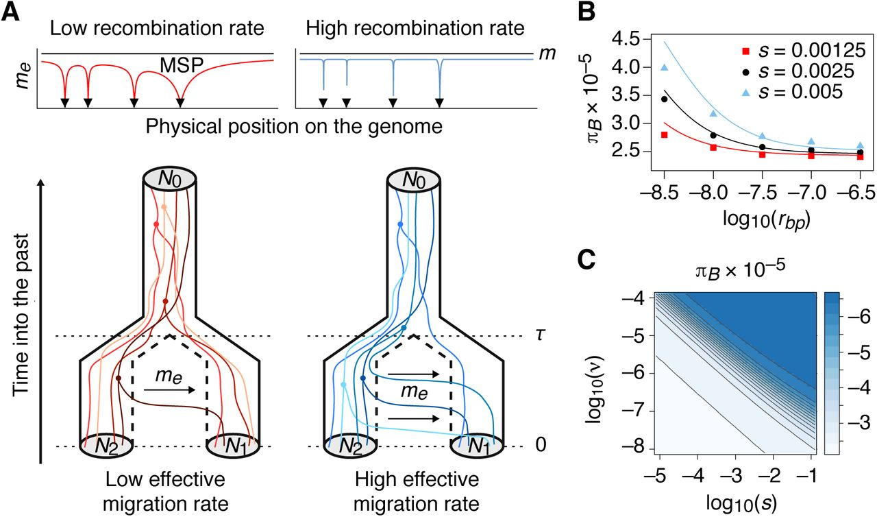 Population-genomic inference of the strength and timing of selection