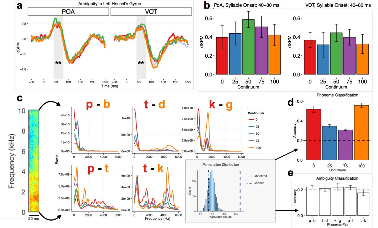 In spoken word recognition the future predicts the past | bioRxiv