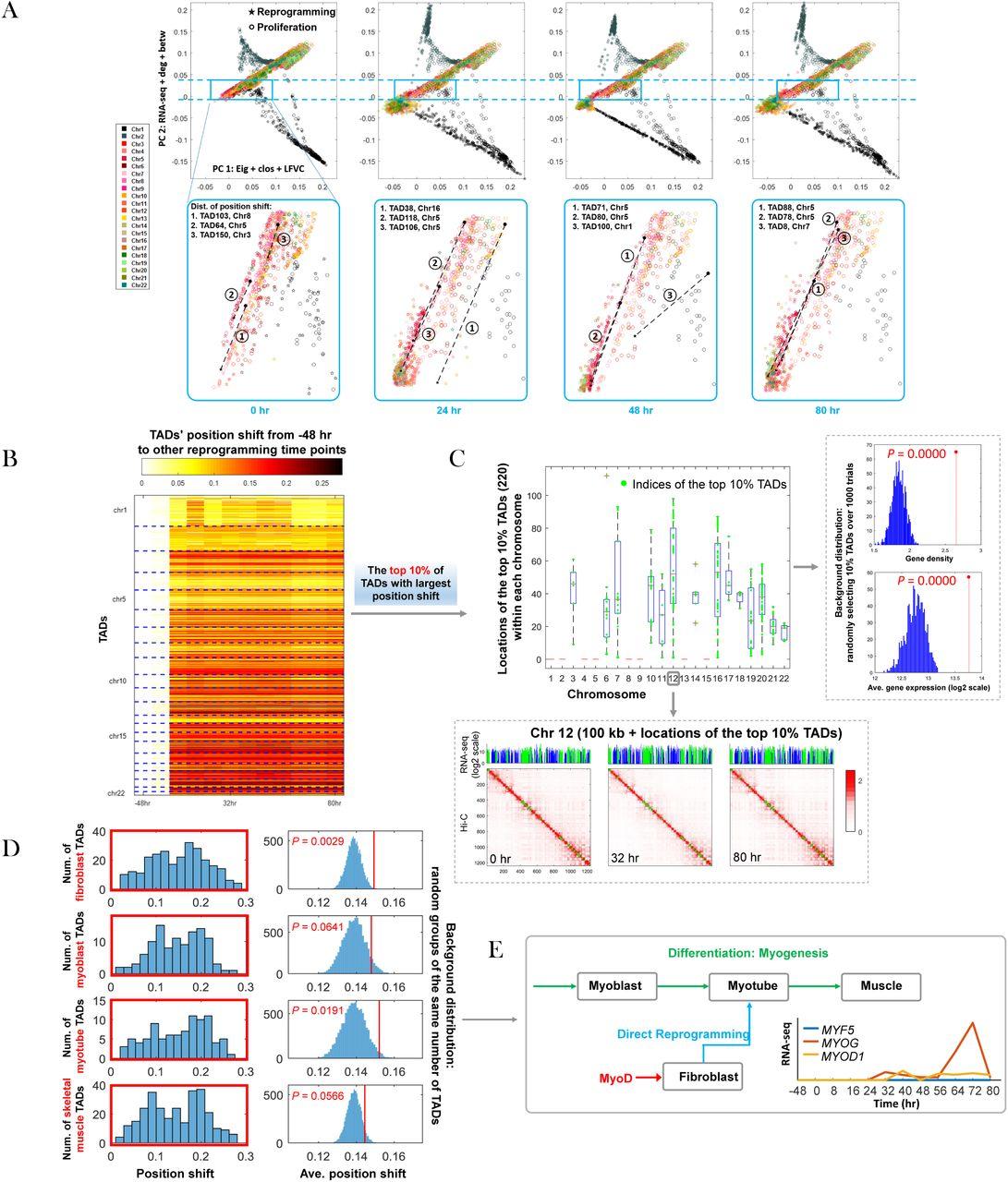 Genome Architecture Leads a Bifurcation in Cell Identity   bioRxiv