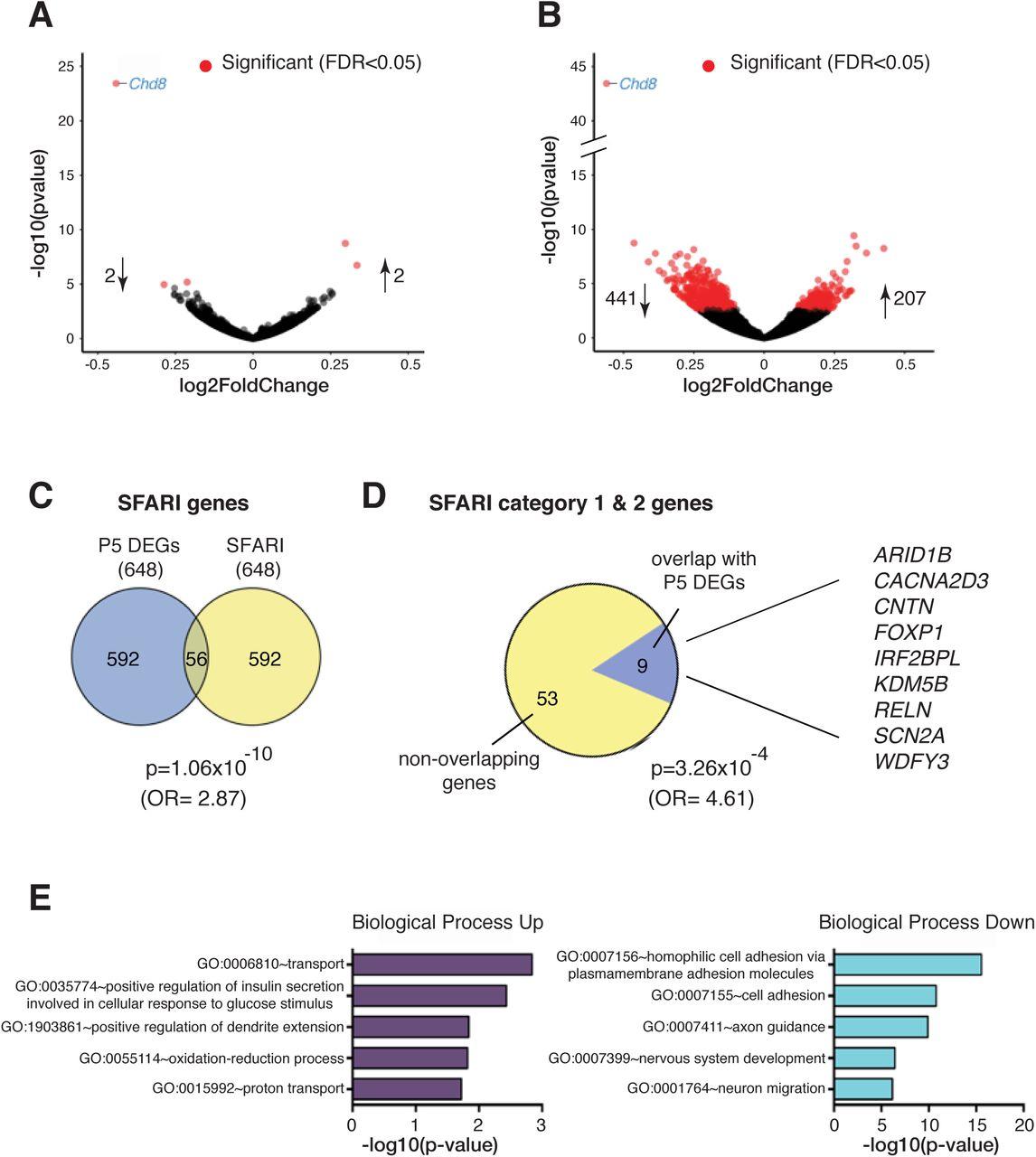 Chd8 haploinsufficient mice display anomalous behaviours