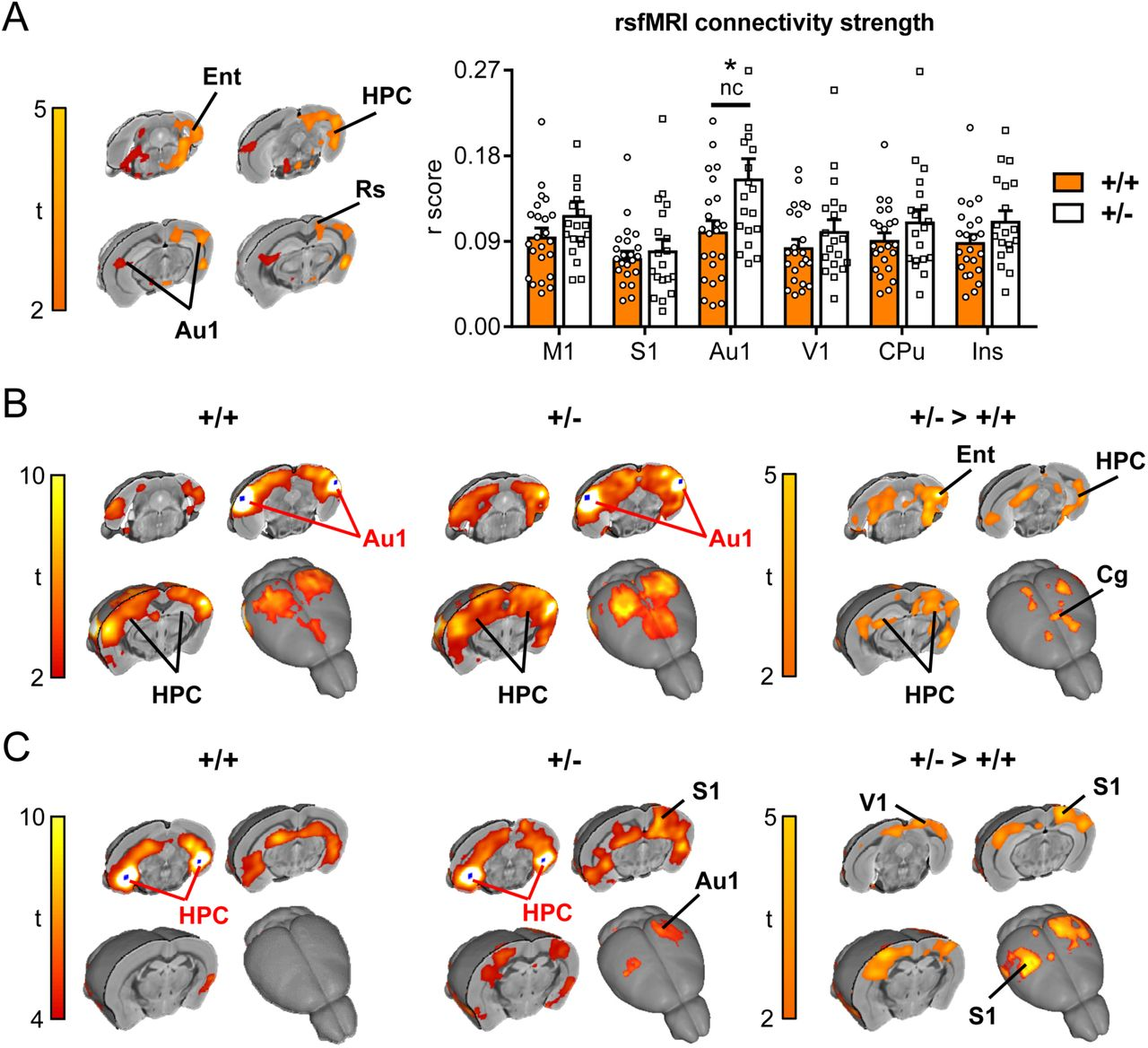 Insular Cortex Alterations In Mouse >> Chd8 Haploinsufficient Mice Display Anomalous Behaviours Increased