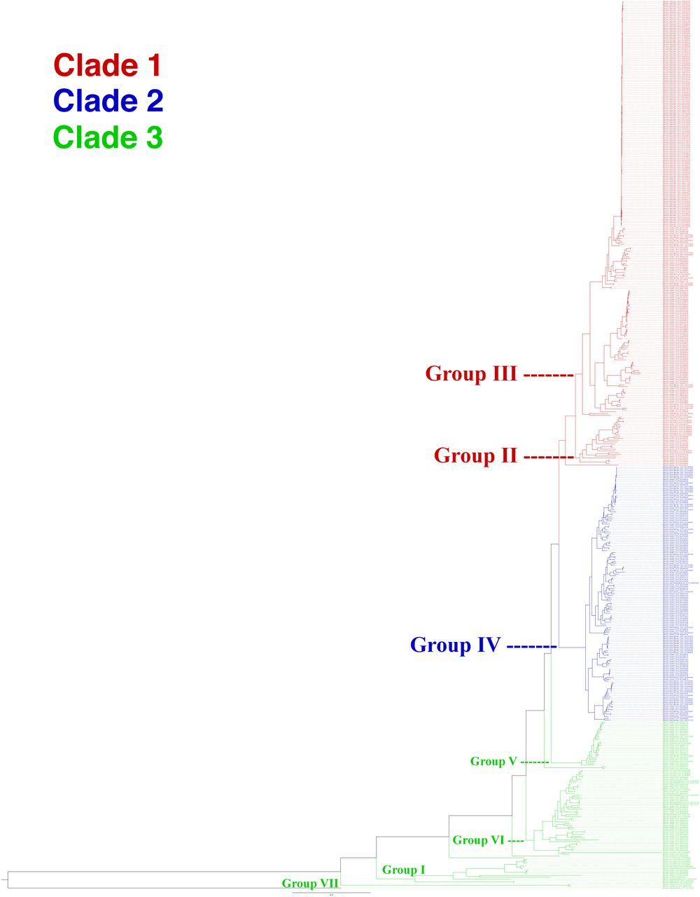 Pan-genome and phylogeny of Bacillus cereus sensu lato | bioRxiv