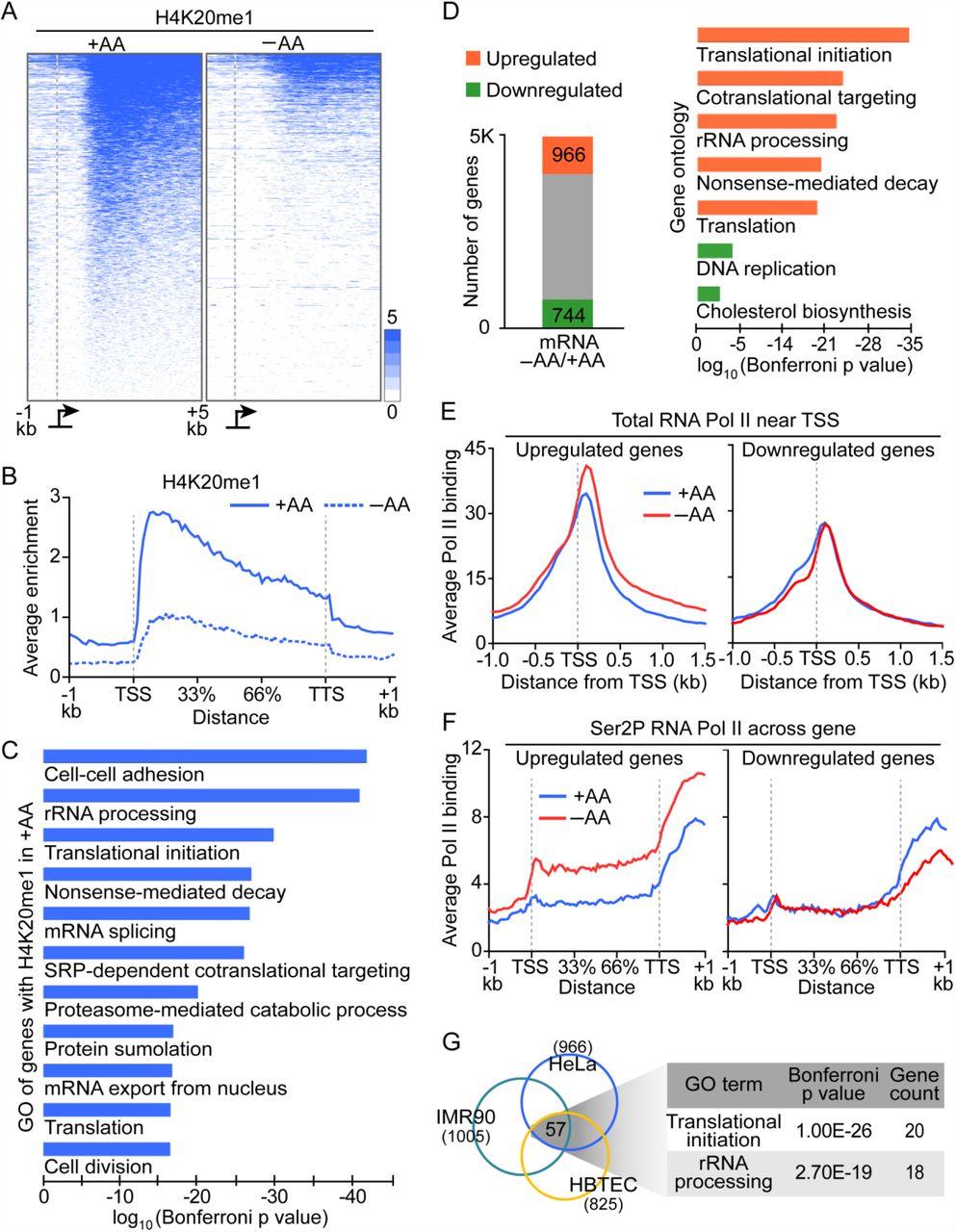 Histone demethylation and c-MYC activation enhance