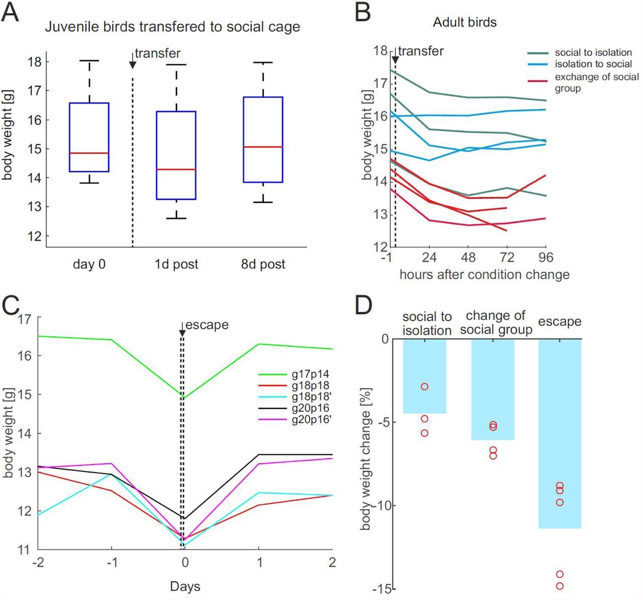 Welfare of zebra finches used in research | bioRxiv