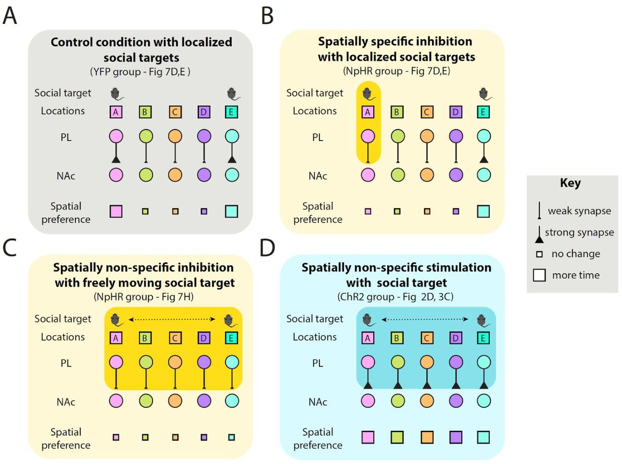 Combined social and spatial coding in a descending