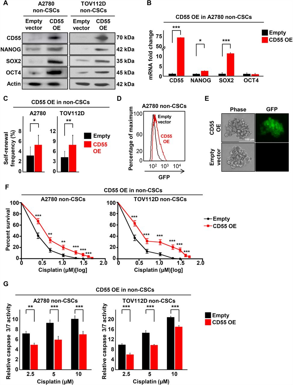 CD55 regulates self-renewal and cisplatin resistance in