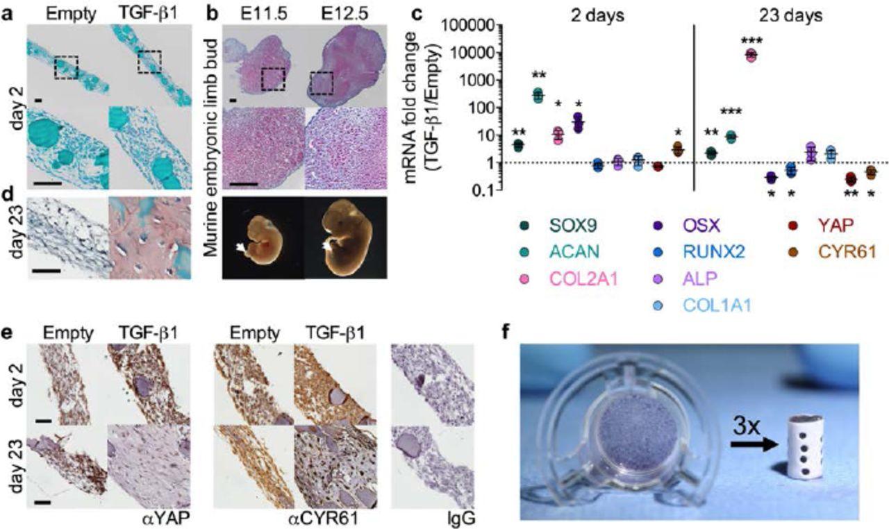 Recapitulating bone development for tissue regeneration
