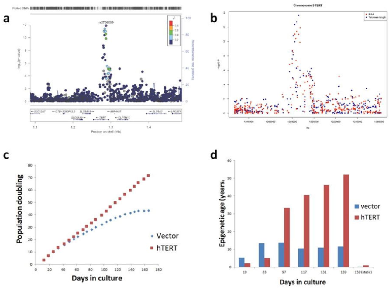 GWAS of epigenetic ageing rates in blood reveals a critical role for