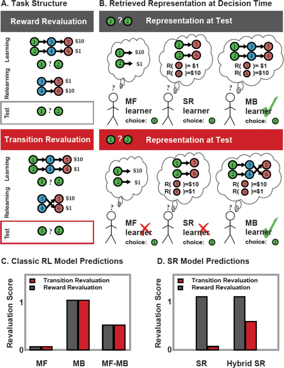 The successor representation in human reinforcement learning   bioRxiv