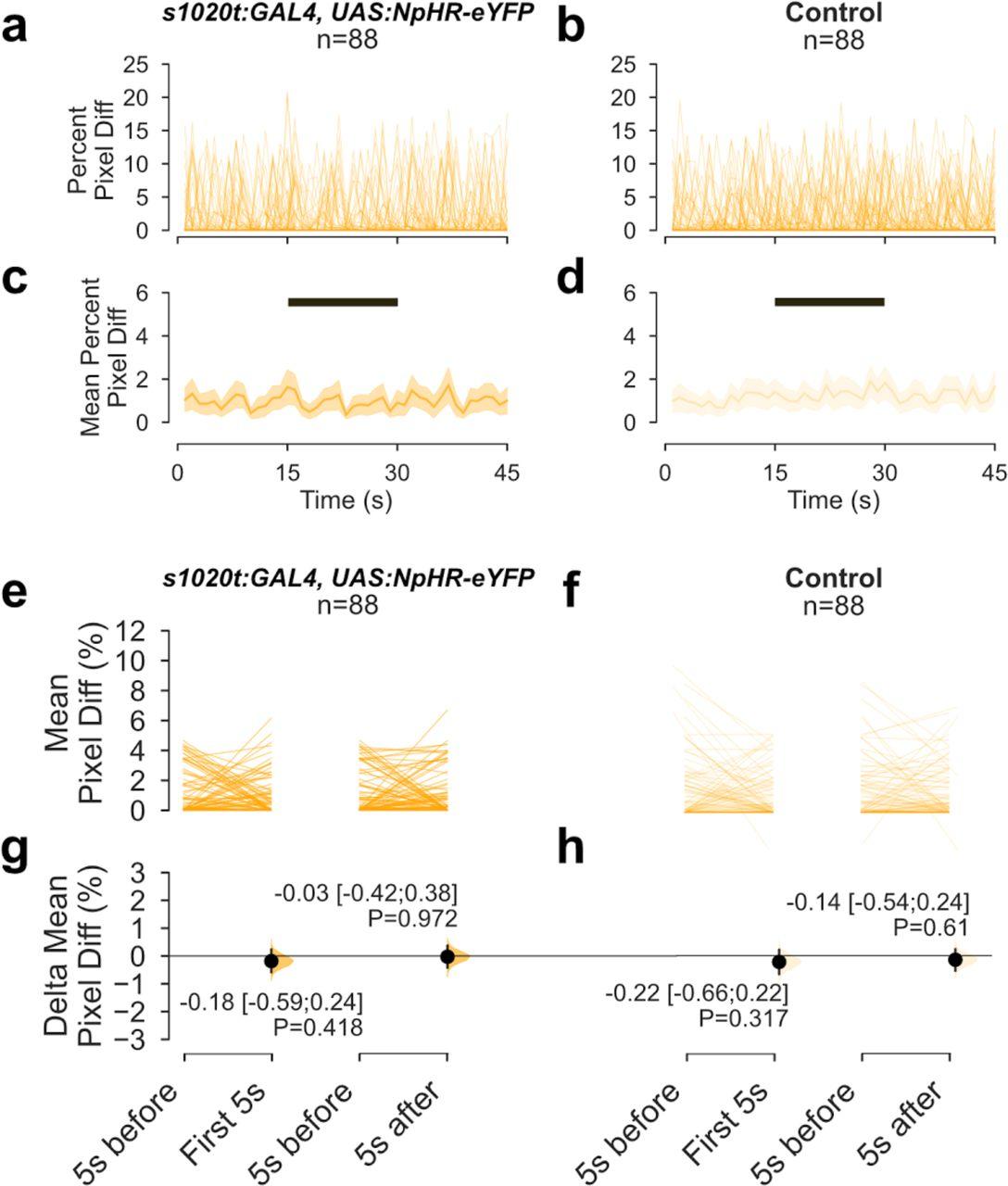 Optical inhibition of zebrafish behavior with anion