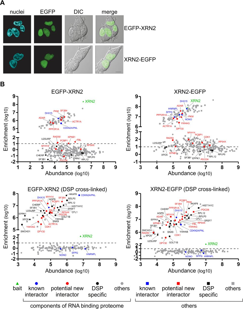 Versatile approach for functional analysis of human proteins and