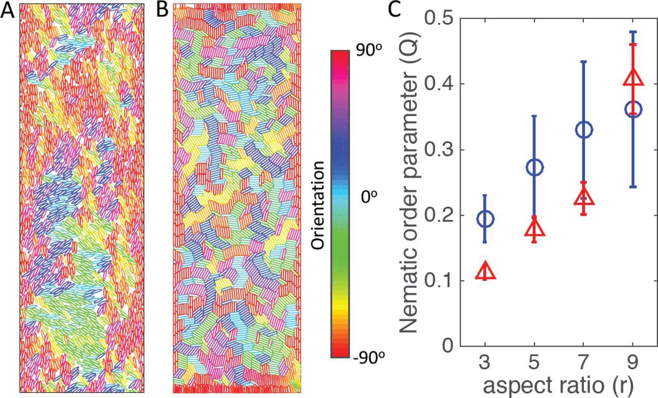 On the mechanism of long-range orientational order of fibroblasts