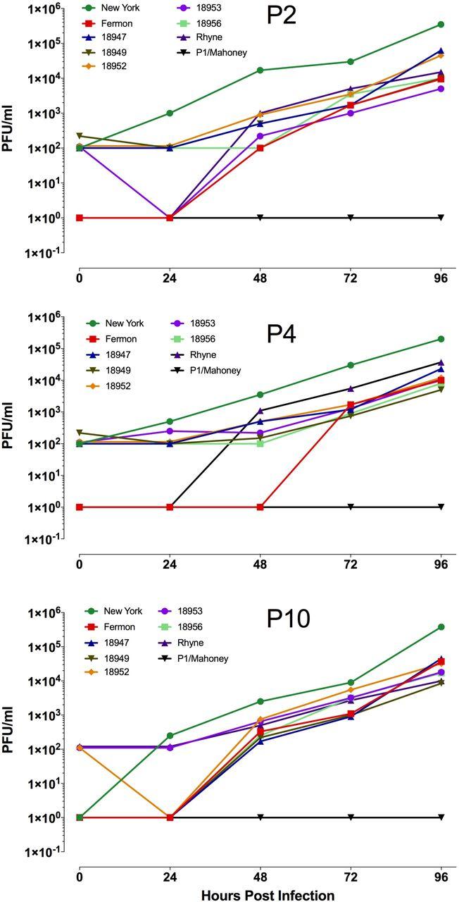 Neurotropism of enterovirus D68 isolates is independent of