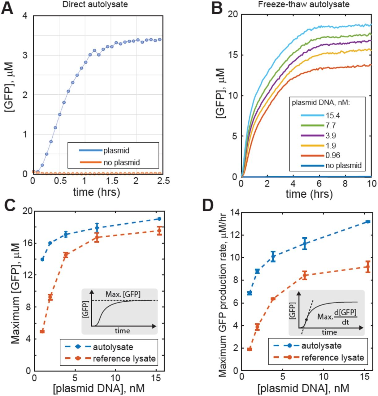 Rapid and scalable preparation of bacterial lysates for cell-free