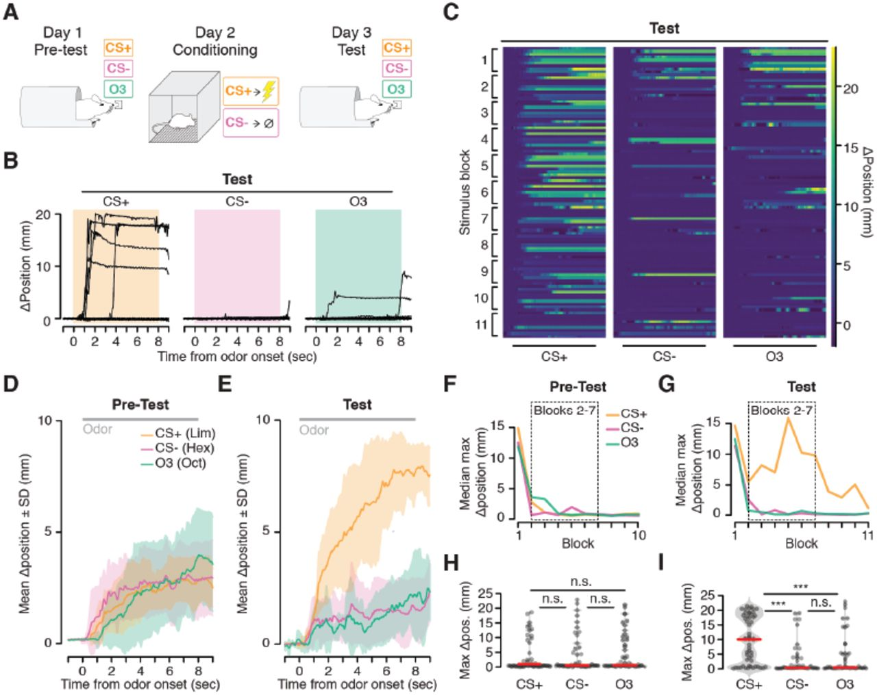 A naturalistic assay for measuring behavioral responses to