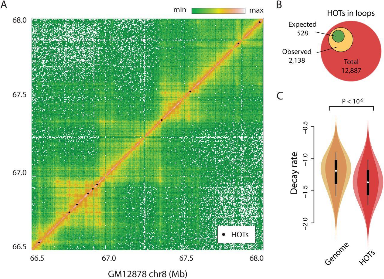 Principles of transcription factor traffic on folded