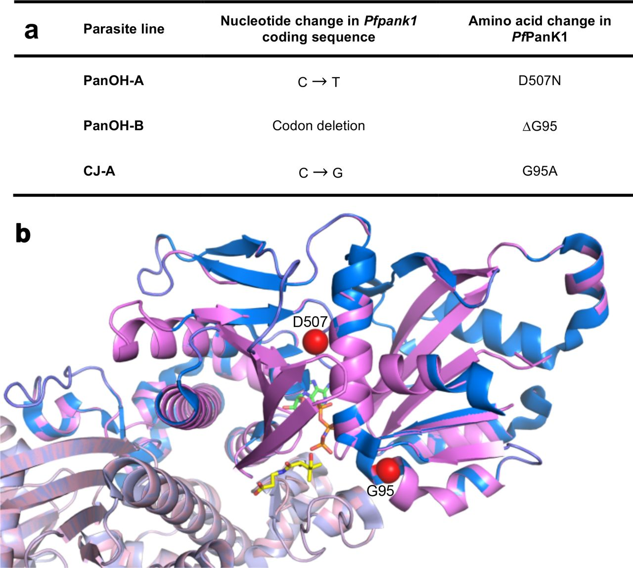 Mutations in the pantothenate kinase of Plasmodium falciparum confer
