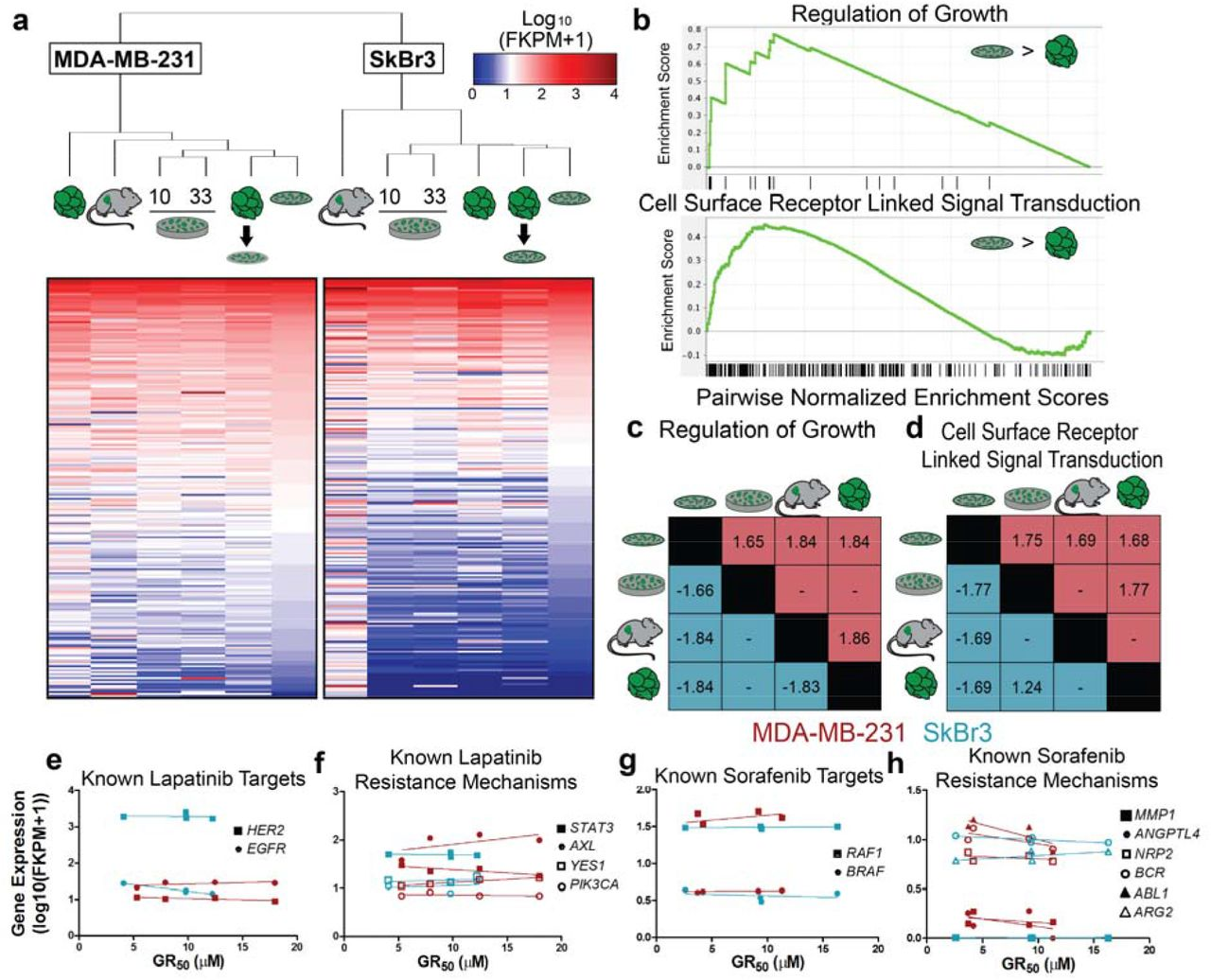 A Biomaterial Screening Approach to Reveal