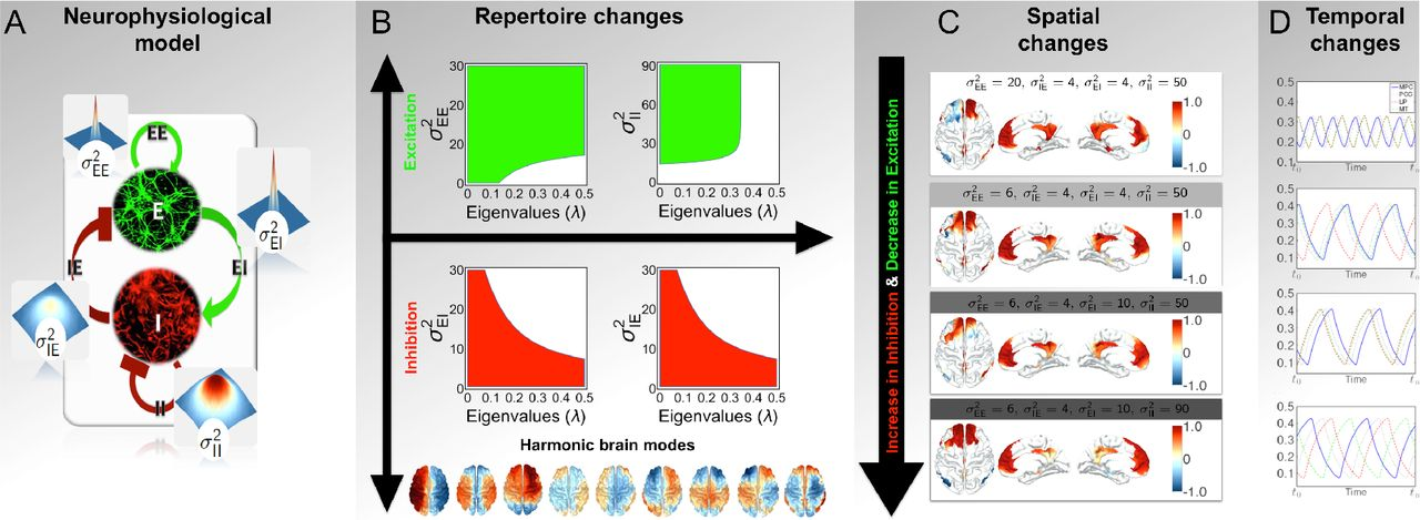Harmonic brain modes: a unifying framework for linking space