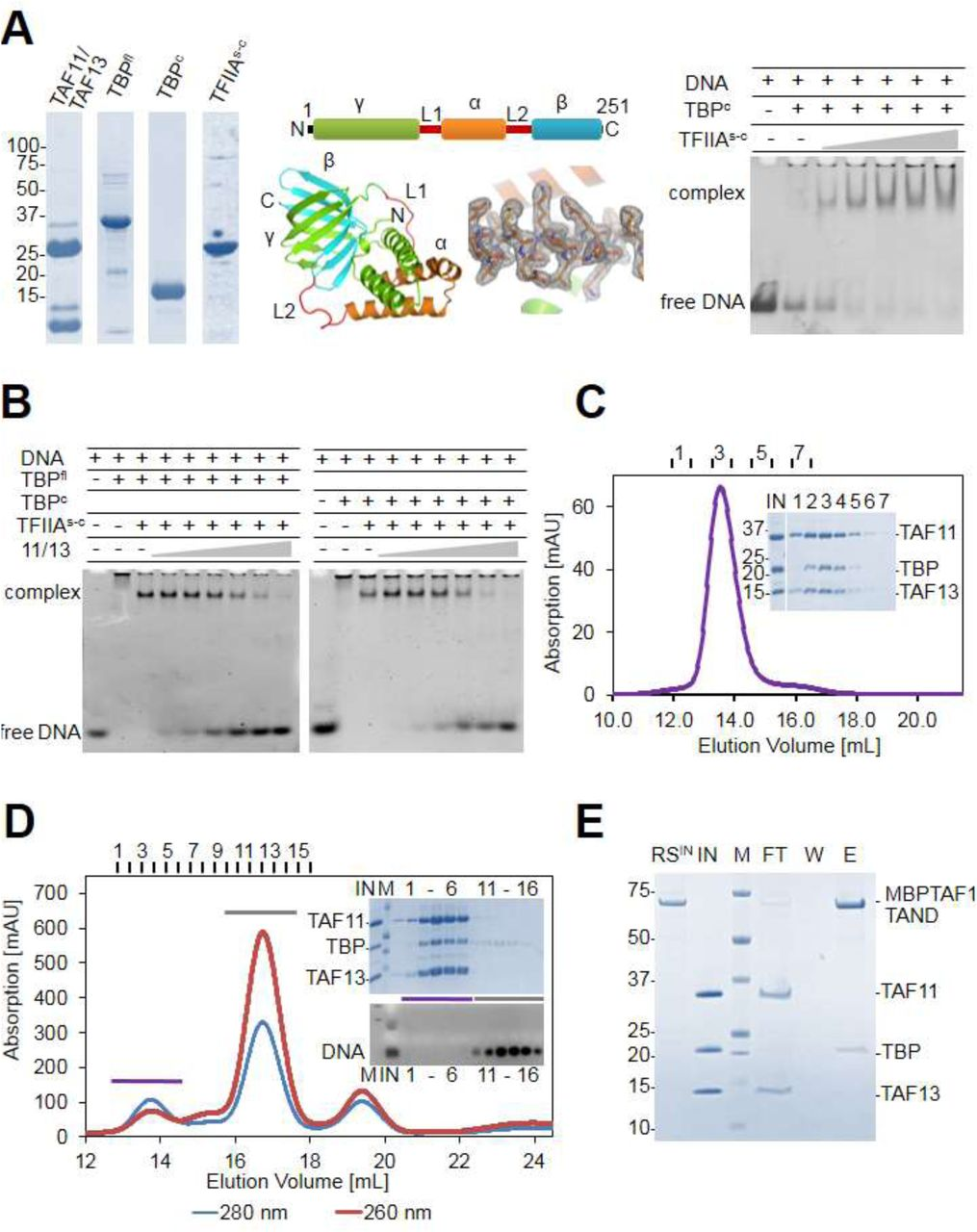 Architecture of TAF11/TAF13/TBP complex suggests novel regulatory