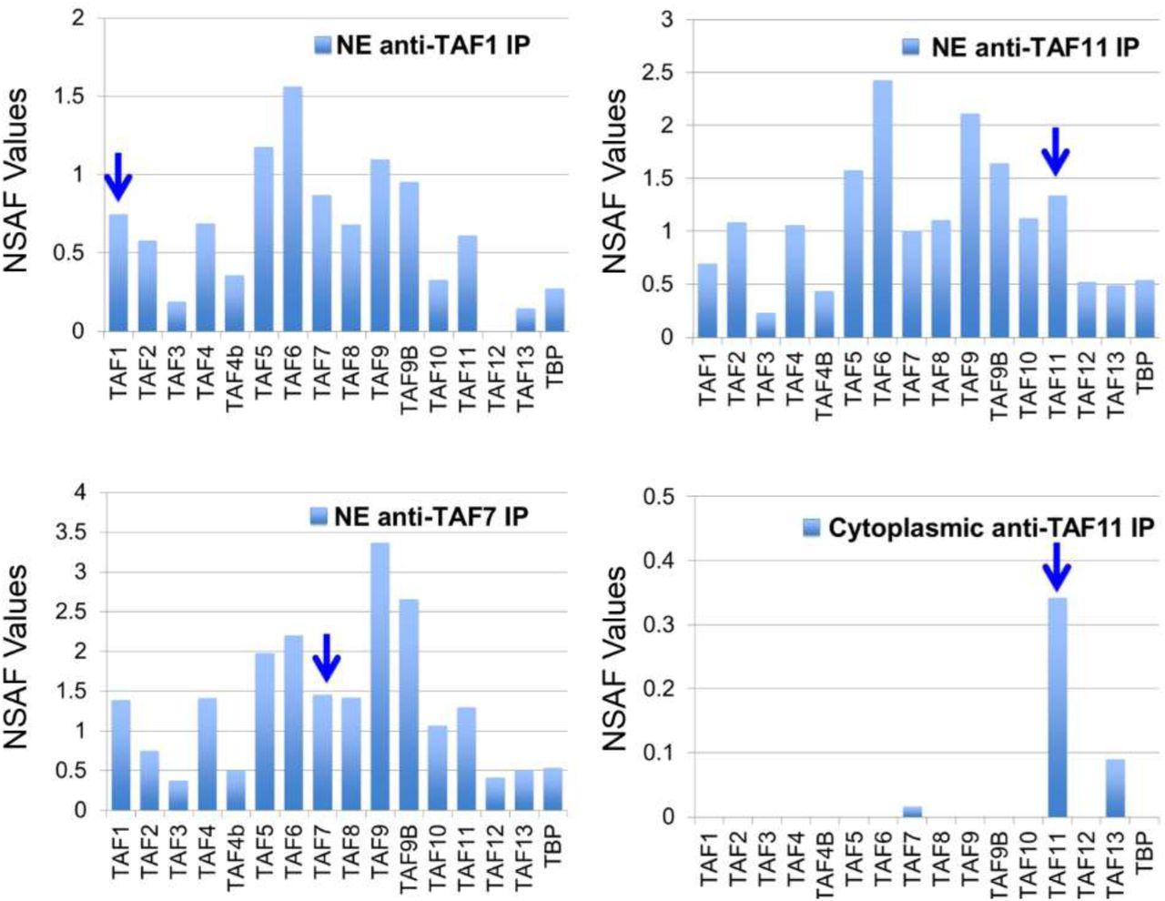 Architecture of TAF11/TAF13/TBP complex suggests novel