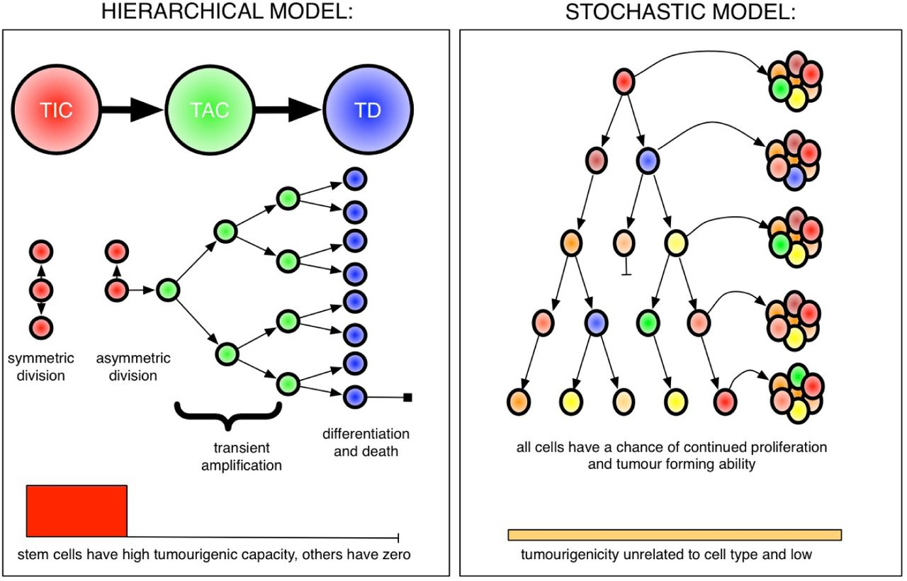 Recasting the cancer stem cell hypothesis: unification using