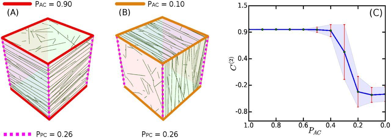 A Framework to Simulate Cortical microtubule Dynamics in