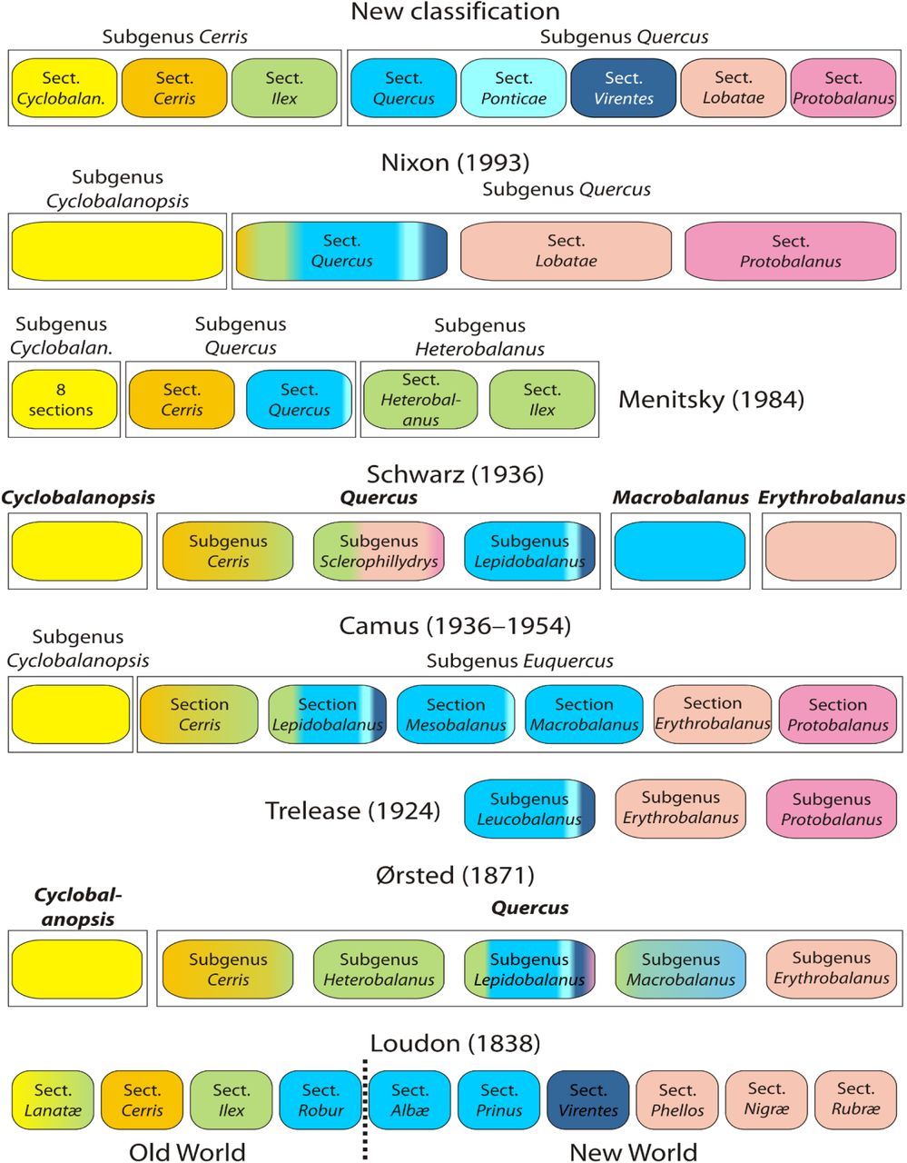 An updated infrageneric classification of the oaks: review