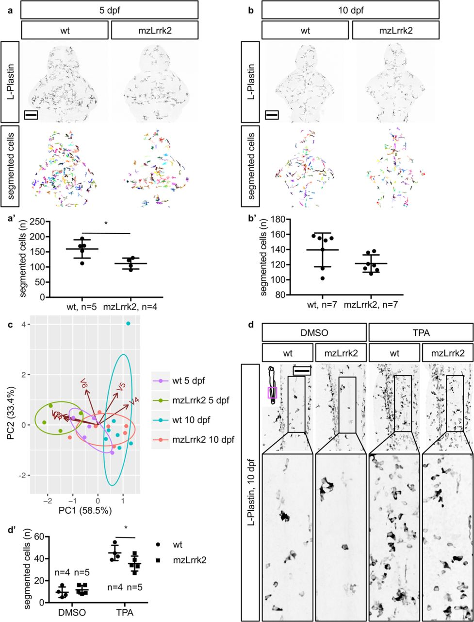 Loss of lrrk2 impairs dopamine catabolism, cell proliferation, and
