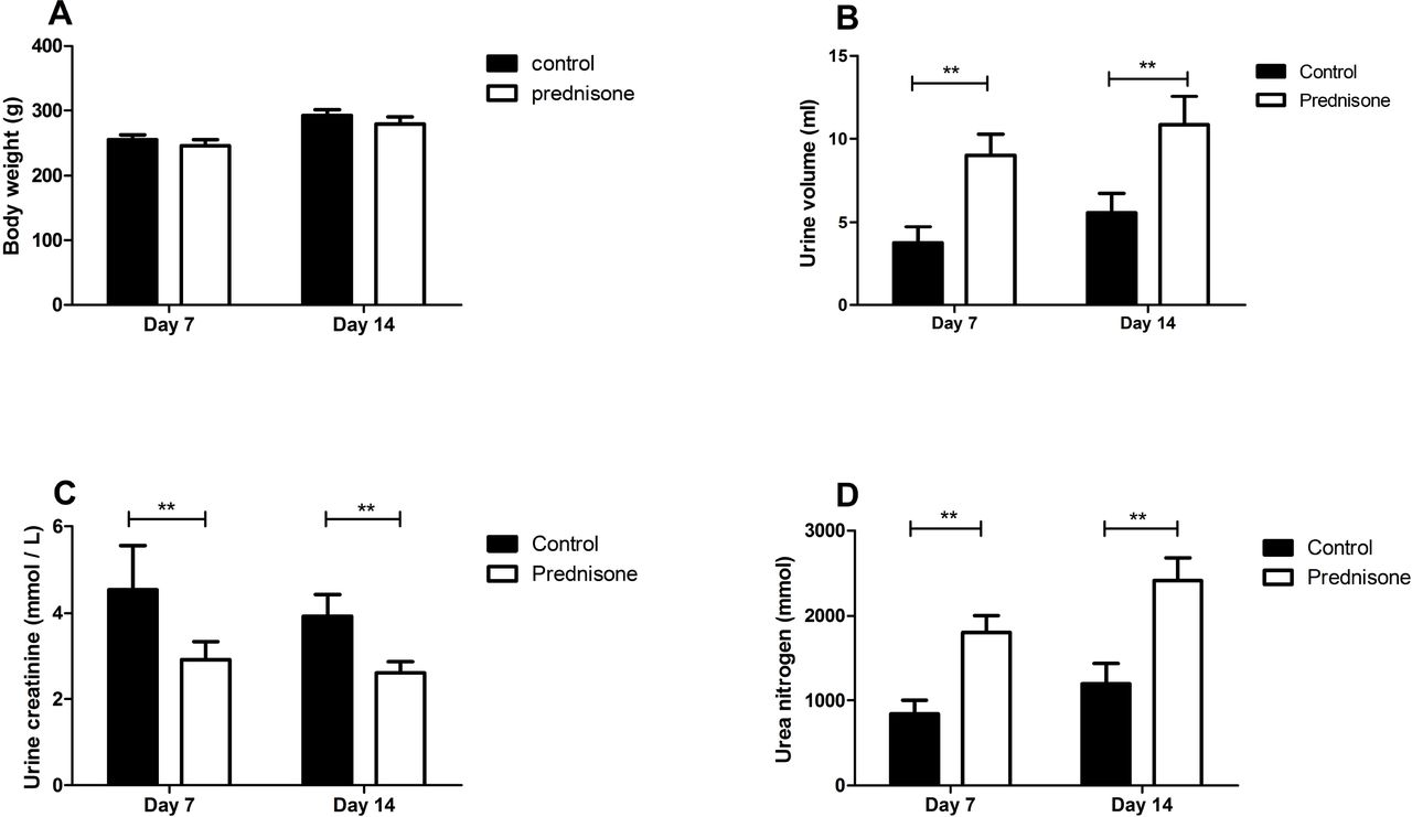 Effects of the glucocorticoid drug prednisone on urinary
