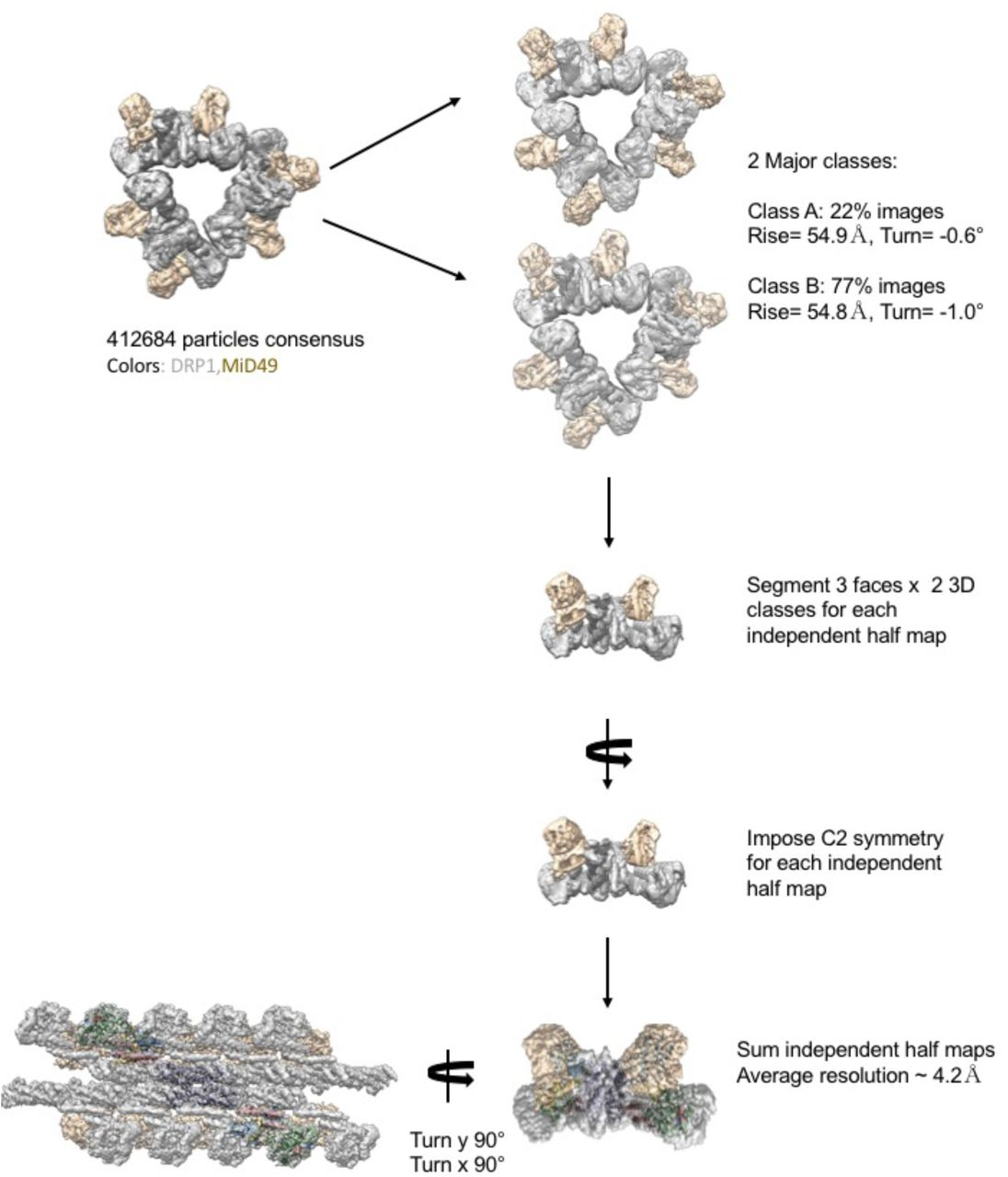 Structural Basis of Mitochondrial Receptor Binding and GTP