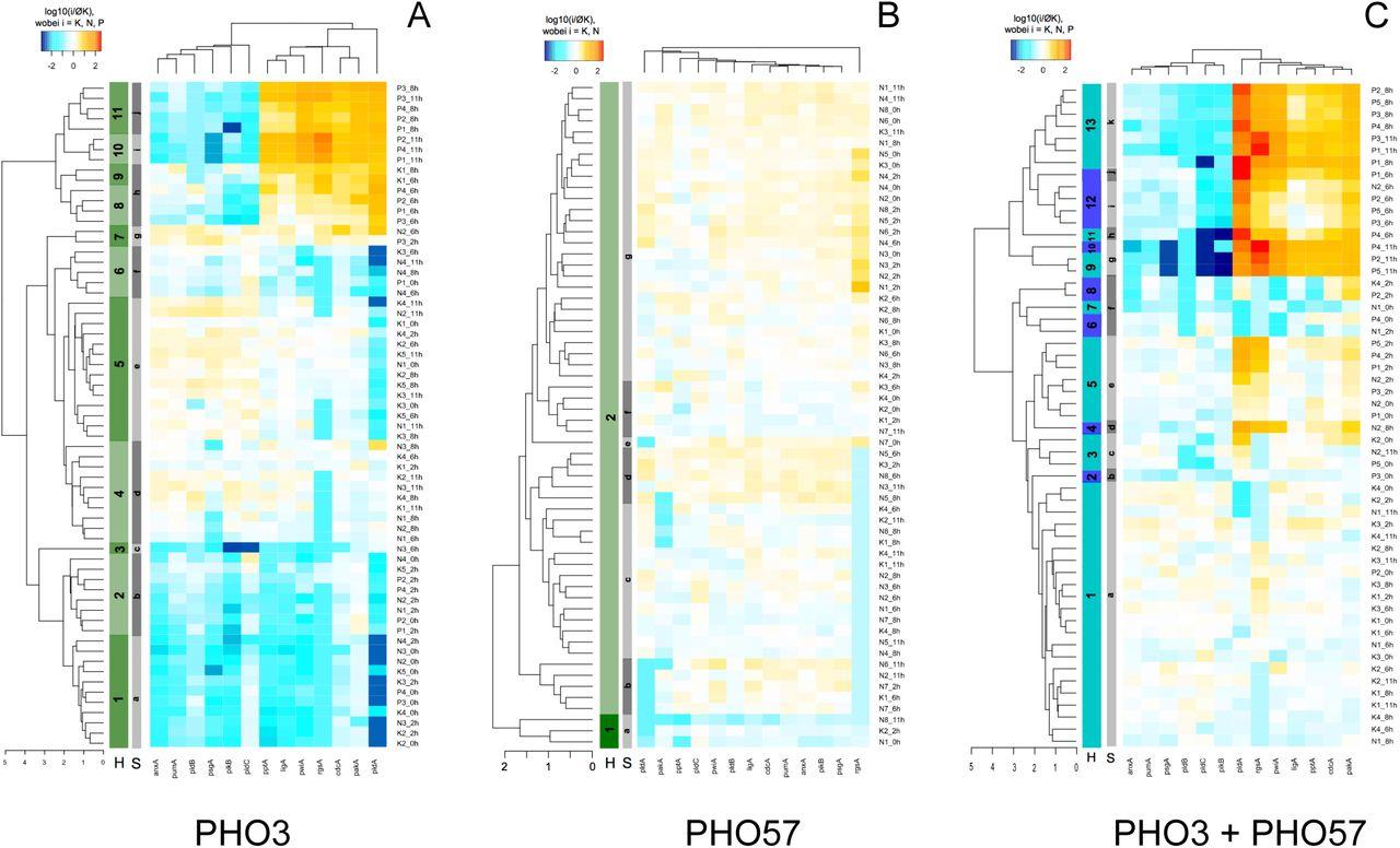 862fad34ee Developmental switching in Physarum polycephalum: Petri net analysis ...
